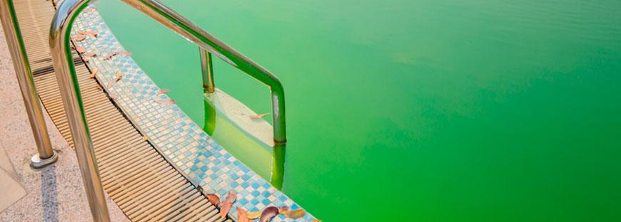 El agua de mi piscina est verde necesitas ayuda - Agua de piscina verde ...